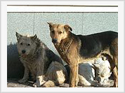 Mutant stray dogs attack Muscovites