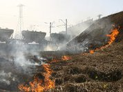 Spring grass burning is troubling Russia