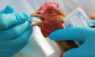 Russia reports world's first-ever A(H5N8) avian flu infection in humans