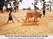 West Africa: Green farming, greater yield