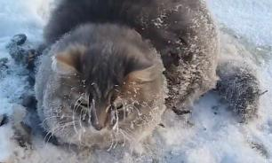 Cat freezes into ice at -35C but stays alive
