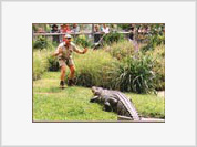 Steve Irwin's death compared to that of Princess Diana
