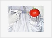 Genetically Modified Food To Make Mankind Retarted Already in 21 Century