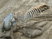 Boy finds well-preserved body of mammoth