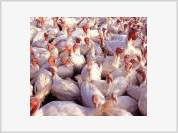Russia bans import of poultry from Finland and Sweden