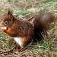 Russian city invaded by squirrels