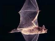 Bats assault Ukrainian city and bite its residents