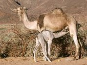 MERS-CoV: What is going on?