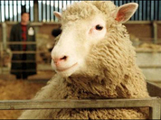 Sheep Dolly's death marks end of cloning