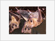 Scientific Article on Bats' Oral Pleasures Triggers Sexual Harassment Scandal