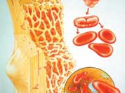 Russia builds data bank of bone marrow donors