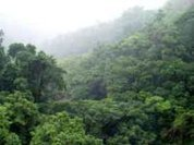 Study of disappearing African tropical forests