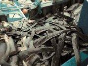 China axes shark fin soup