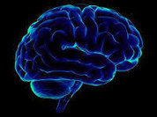 Brain's complexity 'is beyond anything imagined'