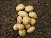 Russia declares potato war on Europe