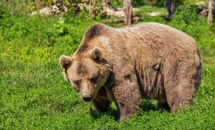 Wild bear attacks and bites man in locked-down city
