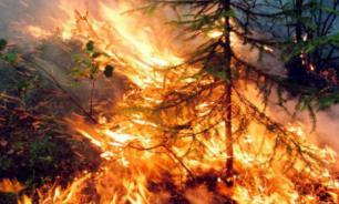 Inferno in Siberia: 4.5 million hectares of woods on fire