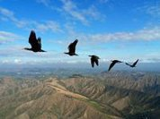 Why do birds fly in V-Formation?