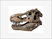 T-Rex skull, mummy hand, piece of Mars sold by auction
