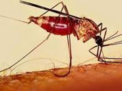 Malaria: 50% of the world's population at risk
