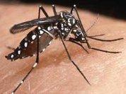 Chikungunya Virus heading for the Americas?