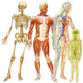 Human body structure strikes imagination with facts and figures
