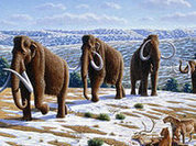 Russian scientists uncover female mammoth with fresh blood