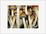 Magic mushrooms can change your life for good, study says
