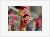 H5N1 bird flu virus confirmed in eight Moscow suburbs