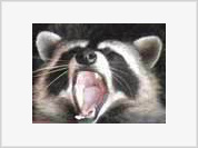 Badger attacks baby and eats its face
