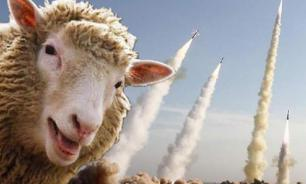 Sheep disrupt the work of US missile defences in Romania