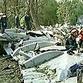 Chechen terrorists had motive to commit terrorist act