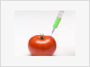 Russian scientists develop anti-AIDS vaccine from genetically modified tomatoes
