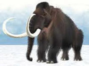 Could wooly mammoths be brought back?