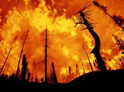 Portugal burns