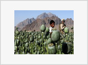 NATO's Afghanistan: The Champion of Drugs Production