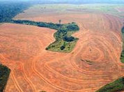 Disappearing Amazon: Congratulations to Brazil's Cattle Ranchers