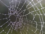Scientists decode key to spider web strength