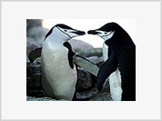 Living in a homosexual world of gay penguins and lesbian fruit flies