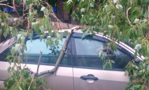 May storm in Moscow: 11 killed. Video
