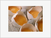 DNA helps egg yolks turn into chickens