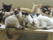 Bird Flu jumps to cats