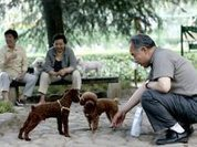 Shanghai establishes one dog only policy