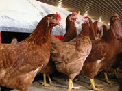Bird flu: No time for complacency