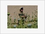 """Death to America"" Fury at NATO Massacre in Kandahar"