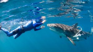 Shark man William Winram