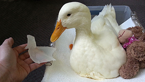 3D foot helps disabled duck walk