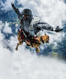 Siara, a skydiving dog