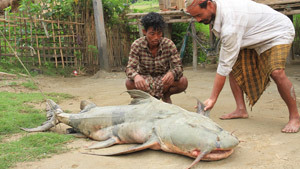 Indian villagers catch river monster