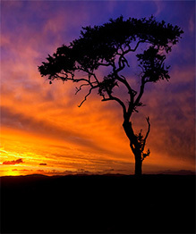 African wildlife at daybreak and sunset